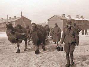 Сталинград. Для них война уже закончилась